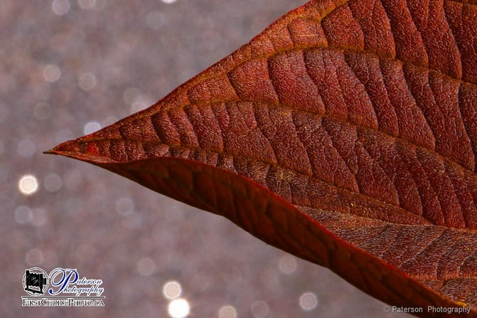 Macro Photography - Leaf #1