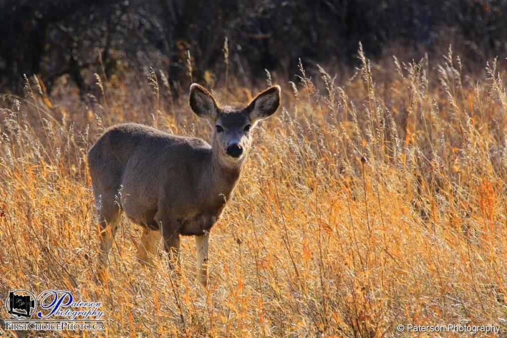 Deer - is that surprising?
