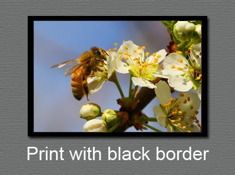 Photo prints with a black border