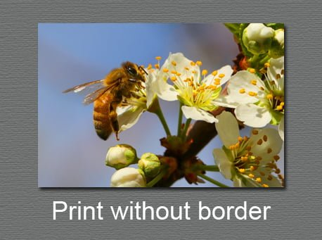 Photo prints without a border
